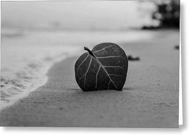 Ground Level Photographs Greeting Cards - Leaf on a Beach Greeting Card by Mountain Dreams