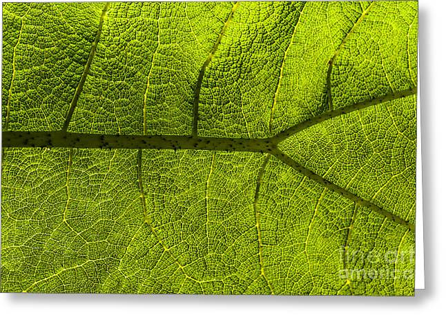 Fresh Green Greeting Cards - Leaf Greeting Card by Svetlana Sewell
