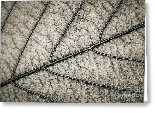 Green Foliage Greeting Cards - Leaf texture Greeting Card by Elena Elisseeva