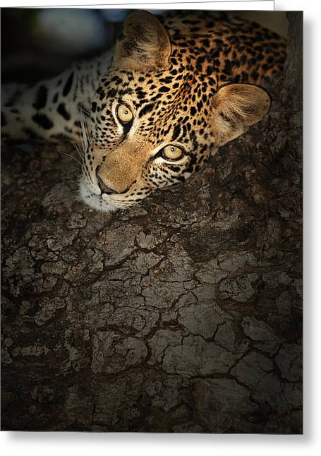 Wild Cats Greeting Cards - Leopard Portrait Greeting Card by Johan Swanepoel
