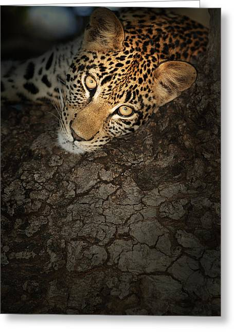 """wild Cat"" Greeting Cards - Leopard Portrait Greeting Card by Johan Swanepoel"