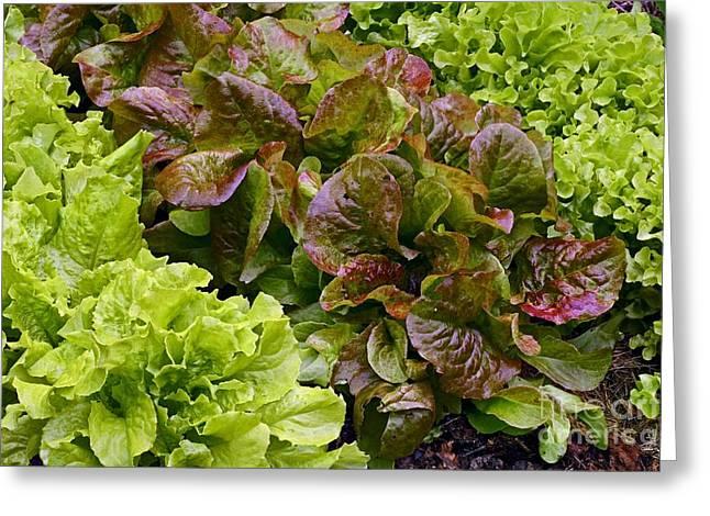 Lettuce Greeting Card by Bjorn Svensson