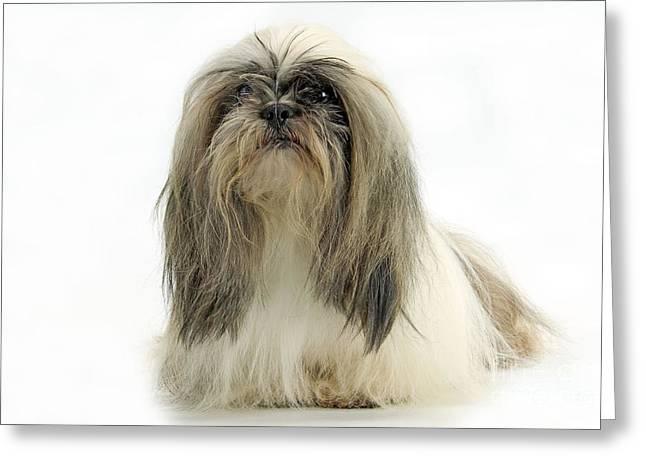 Hairy Dog Greeting Cards - Lhasa Apso Dog Greeting Card by Jean-Michel Labat