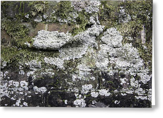 Living History Greeting Cards - Lichen and Moss Greeting Card by Teresa Mucha