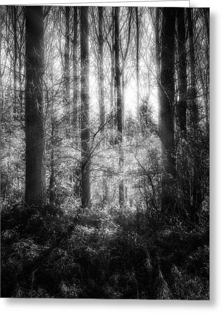 Greyscale Greeting Cards - Light Trough The Forest Greeting Card by Wim Lanclus