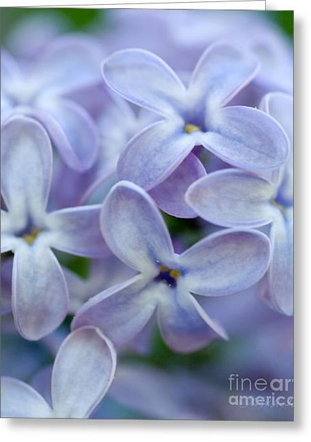 Owner Greeting Cards - Lilac Macro Greeting Card by Iris Richardson