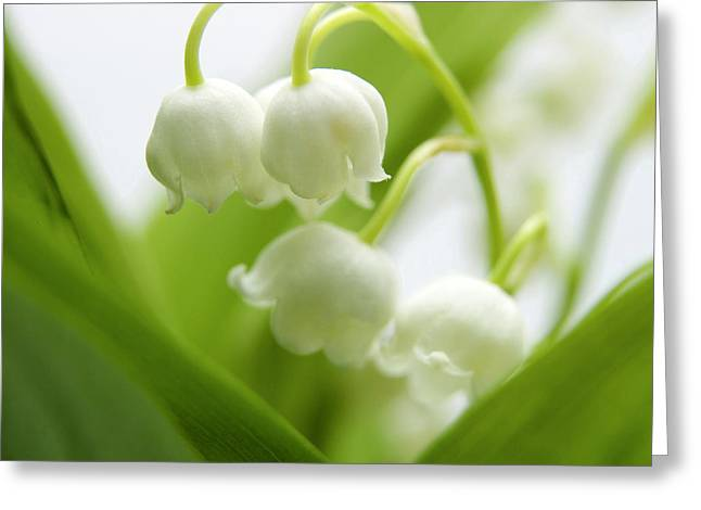 Beauty Greeting Cards - Lily of the valley Greeting Card by Bernard Jaubert