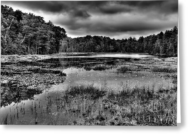 Old And New Greeting Cards - Lily Pads on Fly Pond Greeting Card by David Patterson