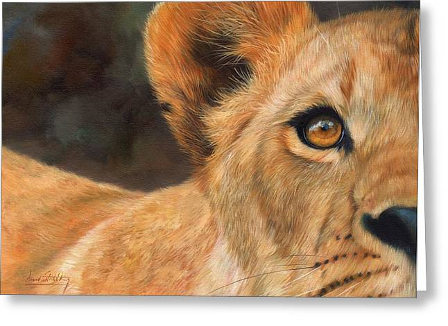 Lions Greeting Cards - Lioness Greeting Card by David Stribbling
