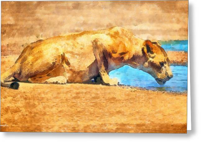 Serengeti Lioness Greeting Cards - Lioness drinking Greeting Card by George Rossidis
