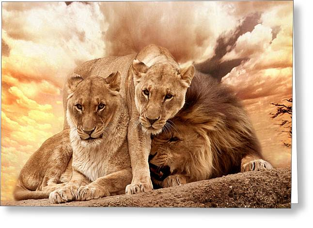 Lioness Greeting Cards - Lions Greeting Card by Christine Sponchia