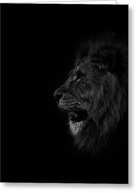 Lions Greeting Cards - Lions Roar Greeting Card by Martin Newman