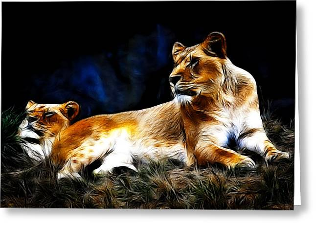Lioness Greeting Cards - Lions Greeting Card by Steve McKinzie