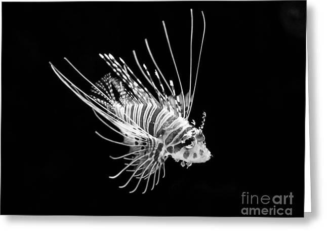 Lionfish Greeting Cards - Little Lionfish Greeting Card by Jamie Pham
