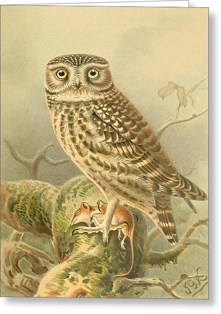 Little Greeting Cards - Little Owl Greeting Card by J G Keulemans