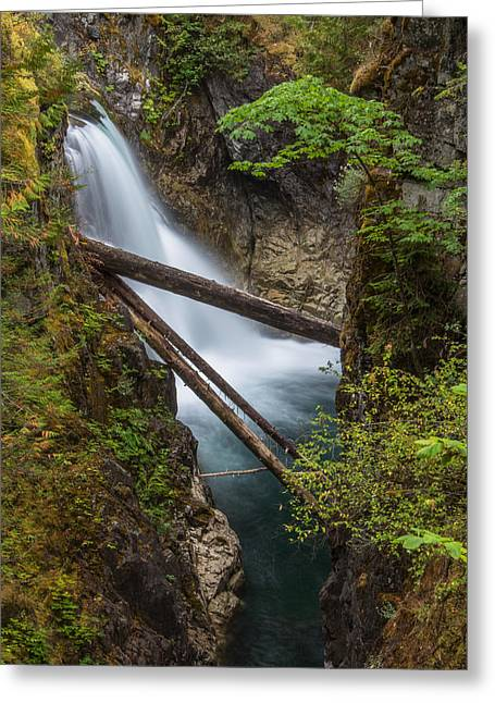 Cole Greeting Cards - Little Qualicum Falls Greeting Card by Carrie Cole