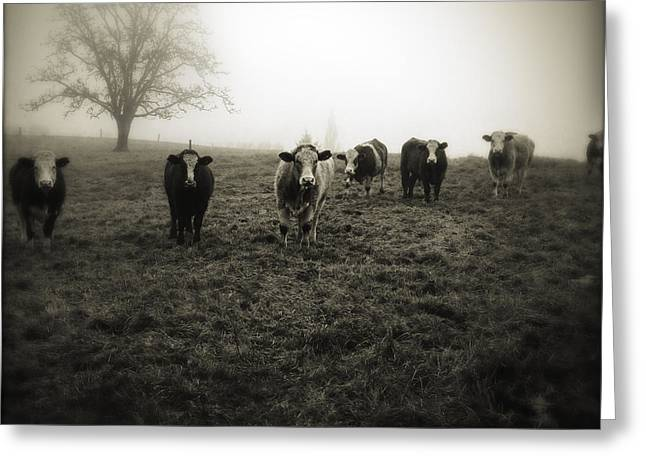 Foggy Landscape Greeting Cards - Livestock Greeting Card by Les Cunliffe