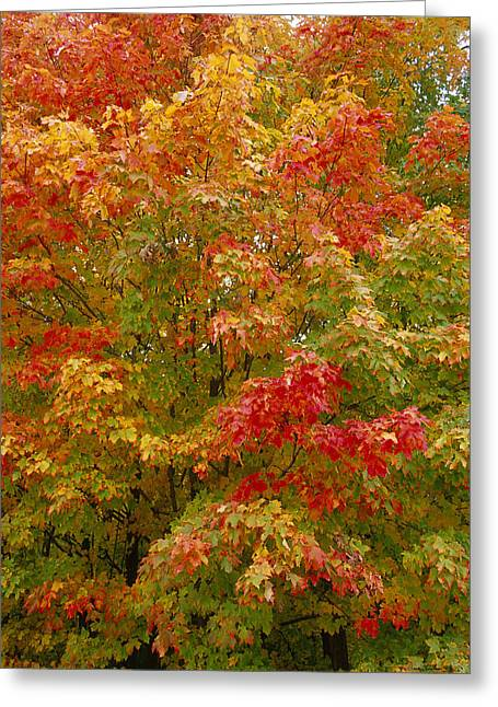 Wisconsin Greeting Cards - Living Color - Northwoods Wisconsin Greeting Card by Bruce Thompson