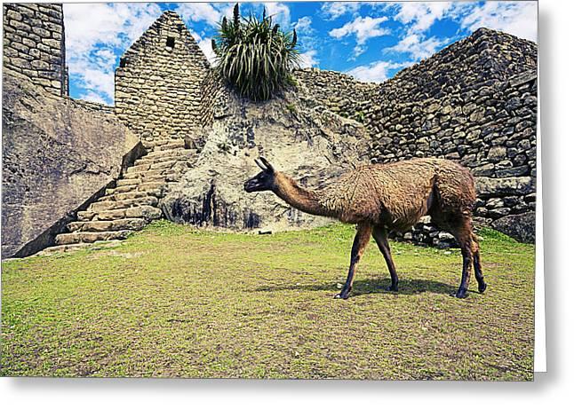 Machu Picchu Greeting Cards - Llamas at Machu Picchu Greeting Card by Alexey Stiop