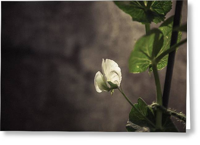 Delicate Flowers Greeting Cards - Lone flower wall art Greeting Card by Chris Fletcher