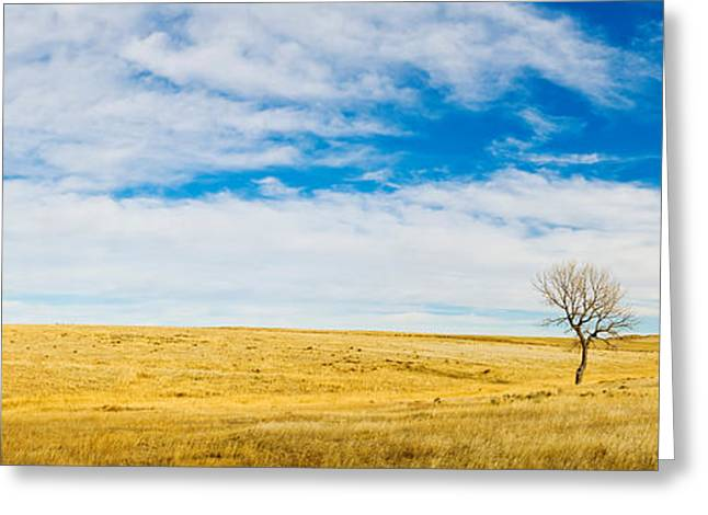 Hackberry Greeting Cards - Lone Hackberry Tree In Autumn Plains Greeting Card by Panoramic Images