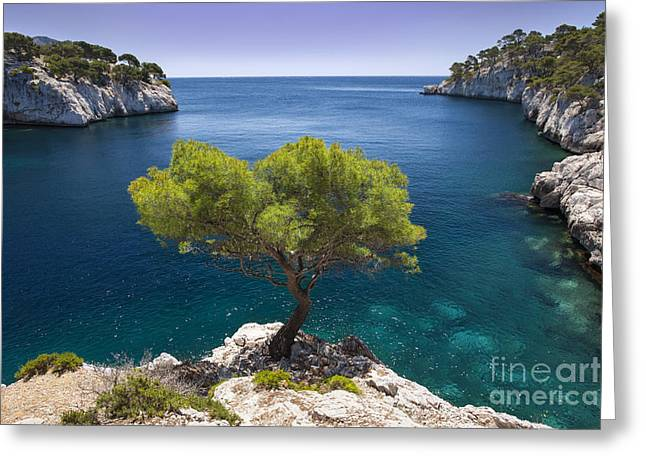 Recently Sold -  - Sea View Greeting Cards - Lone Pine Tree Greeting Card by Brian Jannsen
