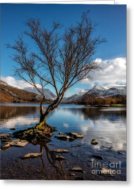 Outdoor Photographs Greeting Cards - Lone Tree Greeting Card by Adrian Evans