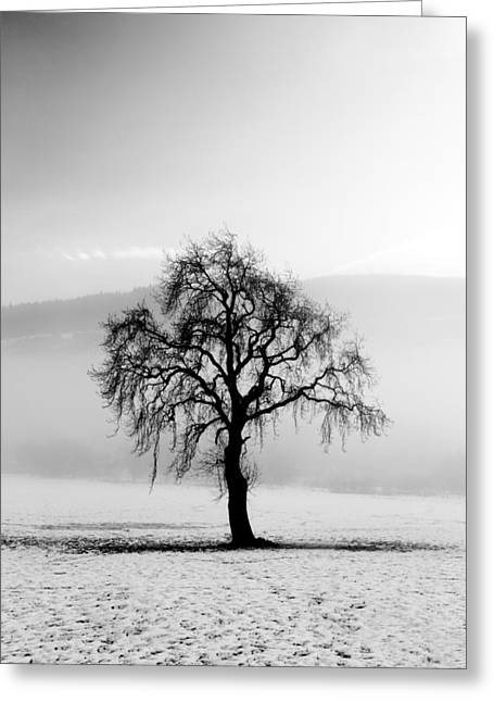 Scotland Wall Art Greeting Cards - Lone tree in the snow Greeting Card by Grant Glendinning