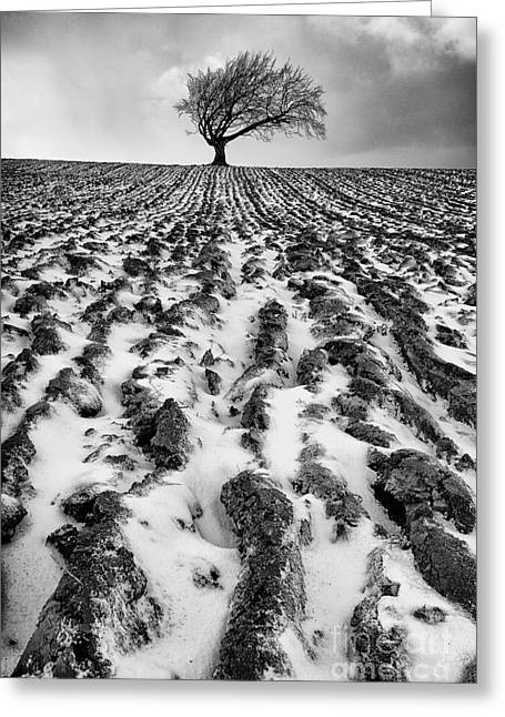 Fresh Snow Greeting Cards - Lone tree Greeting Card by John Farnan