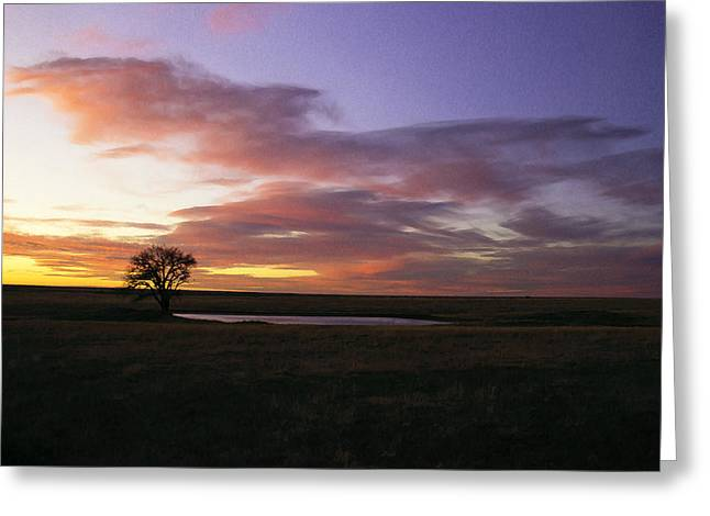Lonesome Dove Greeting Cards - Lone Tree Pond Greeting Card by Michael Gross