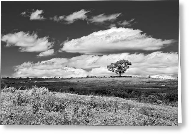 Maine Agriculture Digital Art Greeting Cards - Lone Tree and Sky In Blueberry Field Maine Photograph  Greeting Card by Keith Webber Jr