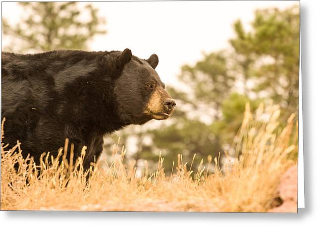 Brown Photographs Greeting Cards - Looking for Lunch Greeting Card by Robert  Torkomian