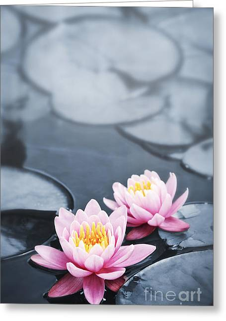 Aquatic Greeting Cards - Lotus blossoms Greeting Card by Elena Elisseeva