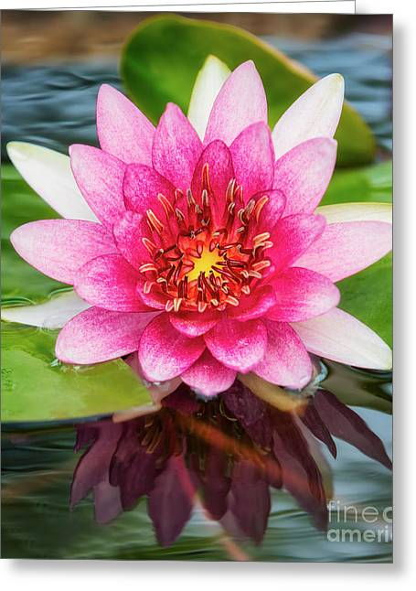 Vibrant Green Greeting Cards - Lotus Flower  Greeting Card by Anek Suwannaphoom