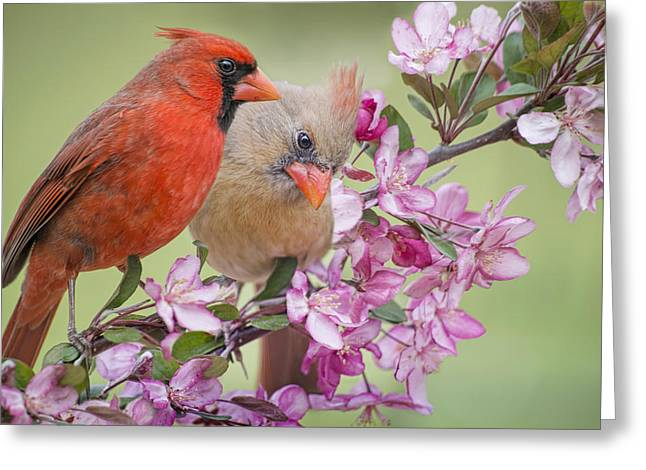 Flowering Branch Greeting Cards - Love is in the Air Greeting Card by Bonnie Barry
