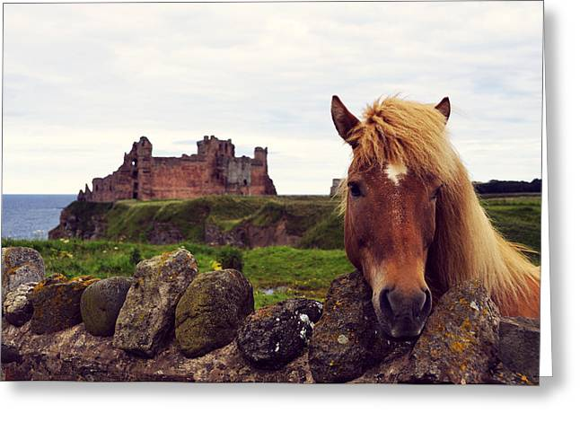 Curtain Wall Greeting Cards - Lovely horse and Tantallon Castle Greeting Card by RicardMN Photography