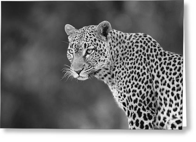 Lovely Leopard Greeting Card by Michele Burgess