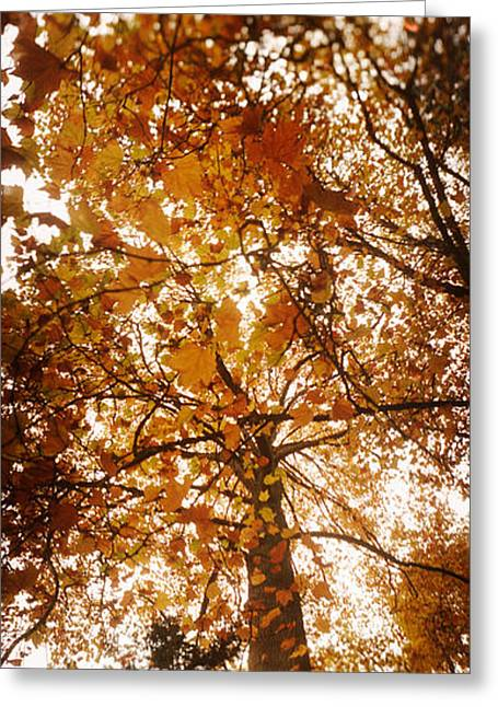 Capitol Greeting Cards - Low Angle View Of Autumn Trees Greeting Card by Panoramic Images