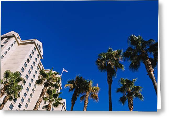 Silicon Greeting Cards - Low Angle View Of Palm Trees In Front Greeting Card by Panoramic Images
