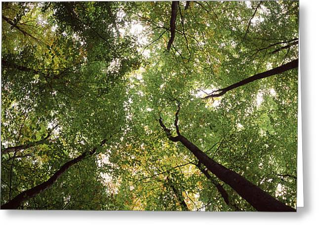 Directly Below Greeting Cards - Low Angle View Of Trees, Bavaria Greeting Card by Panoramic Images