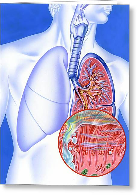 Lower Respiratory Tract Infection Greeting Card by John Bavosi