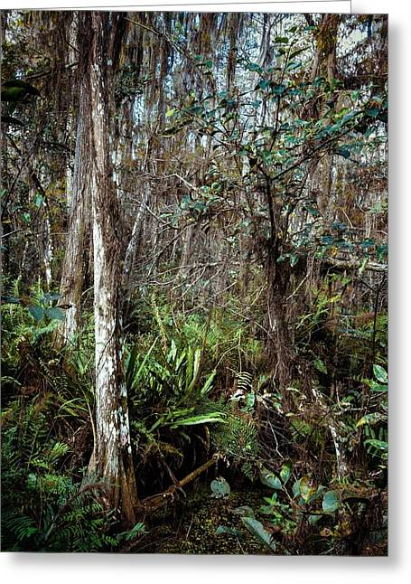 Wildlife Refuge. Greeting Cards - Loxahatchee Refuge Greeting Card by Rudy Umans