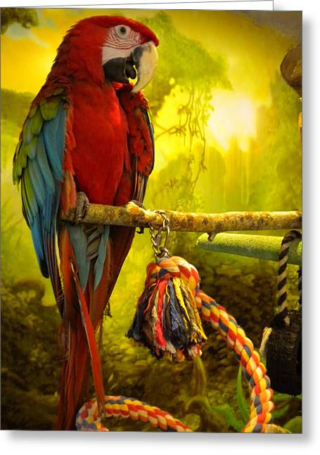 Bird Greetingcards Greeting Cards - Lucky Look Greeting Card by Colette V Hera  Guggenheim
