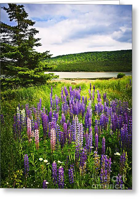 Green Hills Greeting Cards - Lupin flowers in Newfoundland Greeting Card by Elena Elisseeva