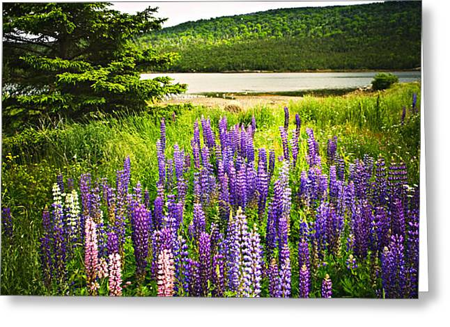 Lupin flowers in Newfoundland Greeting Card by Elena Elisseeva