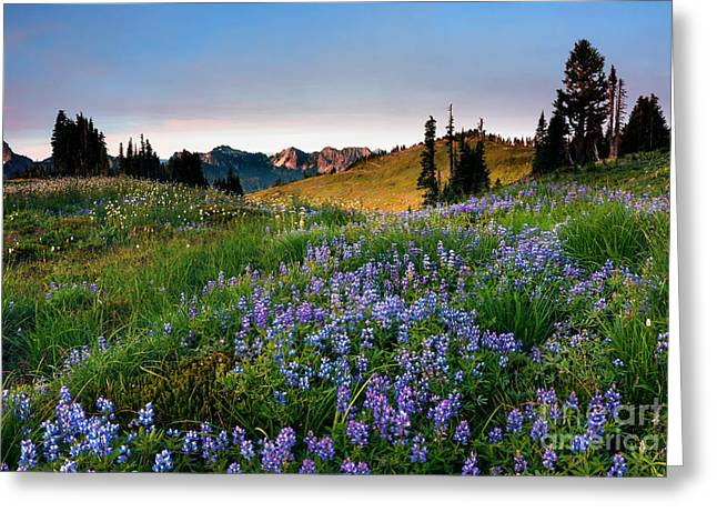 Lupine Greeting Cards - Lupine Sunrise Greeting Card by Mike Dawson