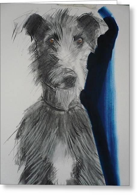 Breeds Greeting Cards - Lurcher, 2012 Charcoal And Oil On Paper Greeting Card by Sally Muir
