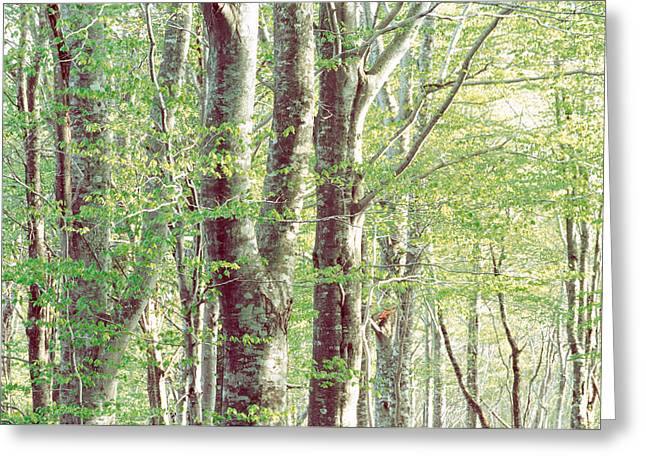 Mid Section Greeting Cards - Lush Forest Greeting Card by Panoramic Images