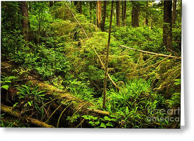 British Columbia Greeting Cards - Lush temperate rainforest Greeting Card by Elena Elisseeva