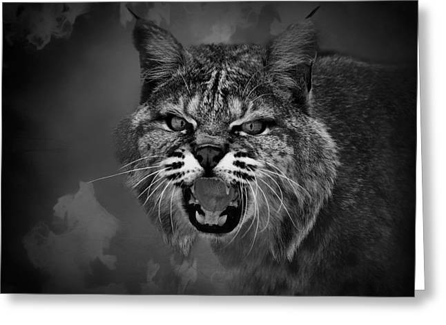 Hiss Greeting Cards - Lynx - Up Close and Personal Greeting Card by Mountain Dreams
